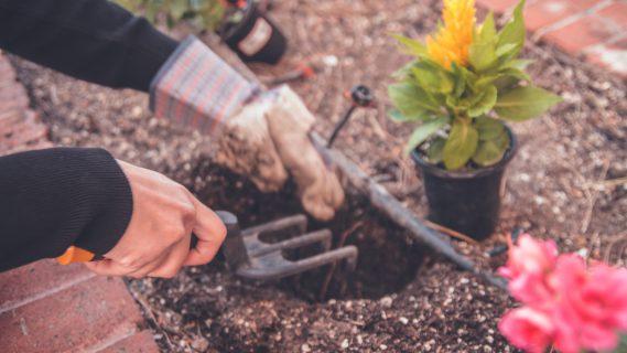 Sfeerbeeld van iemand die een gat graaft in de tuin om een plant in te zetten.