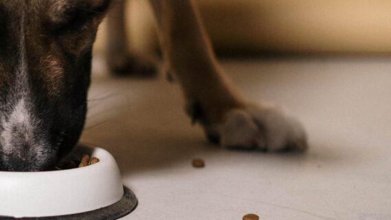 Hond eet brokken uit een hondenbak
