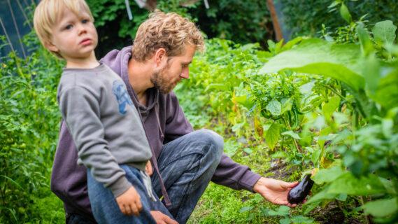Decoratieve foto van een man op zijn knieën bij een courgetteplant samen met zijn kindje